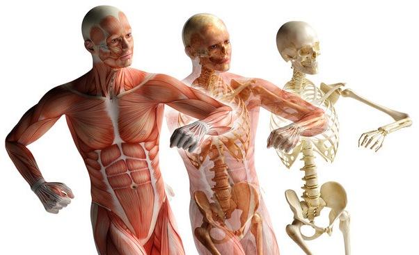 остеопат Лепель