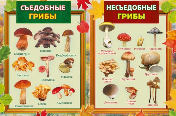 нумерология,грибы,лечение онко,